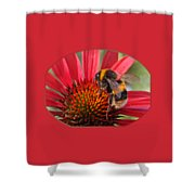 Bee On Red Coneflower 2 Shower Curtain