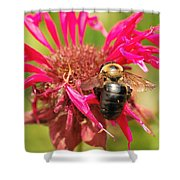 Bee On Tea Bloom Shower Curtain