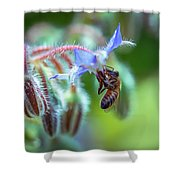 Bee On The Flower 2 Shower Curtain