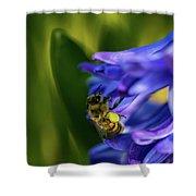 Bee On The Hyacinth Shower Curtain