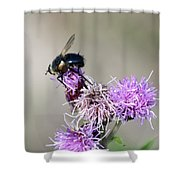Bee On Thistle Shower Curtain