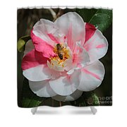 Bee On White And Pink Camellia Shower Curtain