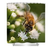 Bee On White Shower Curtain