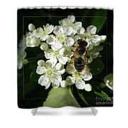 Bee On White Flowers 2 Shower Curtain