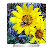 Bee On Wild Sunflowers Shower Curtain
