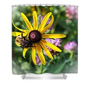 Bee On Yellow Coneflower Shower Curtain