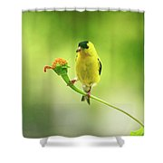 Goldfinch On Zinnia With Textures Shower Curtain
