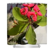 Bee Red Rose Shower Curtain