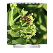 Bee Resting Shower Curtain