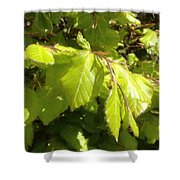 Beech Hedge In Spring Shower Curtain