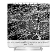 Beech Tree Branches, Light And Shadow Shower Curtain