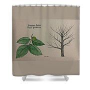 Beech Tree Id Shower Curtain