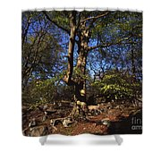 Beech Trees Coming Into Leaf  In Spring Padley Wood Padley Gorge Grindleford Derbyshire England Shower Curtain