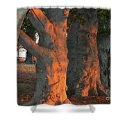 Beeches At The Beach Shower Curtain