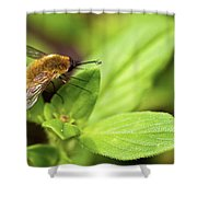 Beefly Shower Curtain