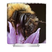 Bee's Eye Shower Curtain