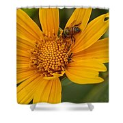 Bees Love Coreopsis Shower Curtain