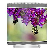 Bees On Butterfly Bush Framed Shower Curtain