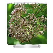 Bees On Joe-pyed Weed Shower Curtain
