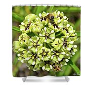Bees Pollinating Shower Curtain