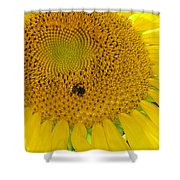 Bees Share A Sunflower Shower Curtain
