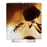 Beetle And Black Eyed Susan Shower Curtain