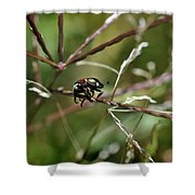 Beetle Balances On Branch Shower Curtain
