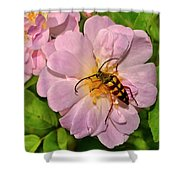 Beetle In A Rose 003 Shower Curtain