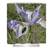 Beetle On Iris Shower Curtain