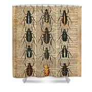 Beetles Bugs Zoology Illustration Vintage Dictionary Art Shower Curtain
