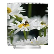 Beezy Day Ahead Shower Curtain