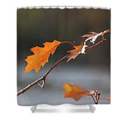 Before Flying Away Shower Curtain