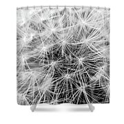 Before The Breeze Shower Curtain