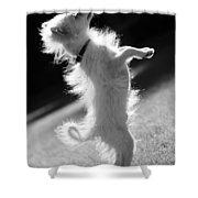 Begging Dog Black And White Shower Curtain