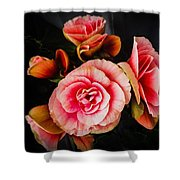 Begonia In Pink Shower Curtain