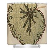 Begonia Marshallii  Shower Curtain