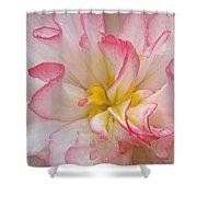 Begonia Pink Frills - Vertival Shower Curtain