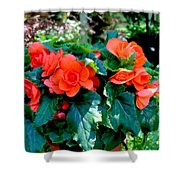 Begonia Plant Shower Curtain