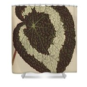 Begonia Rex Shower Curtain