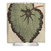 Begonia Rex, Variety Isis Shower Curtain