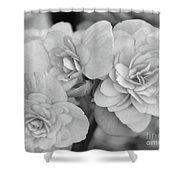 Begonias In Black And White Shower Curtain