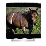 Being Free Shower Curtain