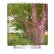 Being Old Trees Shower Curtain