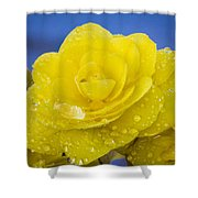 Bejeweled Begonia Shower Curtain