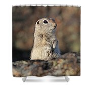 Belding Ground Squirrel Shower Curtain