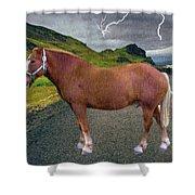 Belgian Horse Shower Curtain