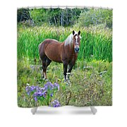 Belgian In Flowers Shower Curtain
