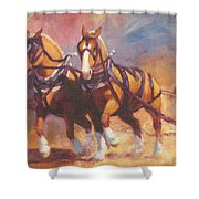 Belgian Team Pulling Horses Painting Shower Curtain