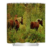 Belgians In Fall Shower Curtain