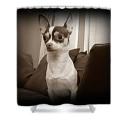 Bella Dulce Shower Curtain